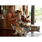 The River Kwai&Tiger Temple