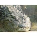 The Million Years Stone Park and Crocodile Farm(PKG1006)