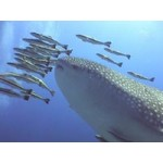 Under Water World Pattaya(PKG1010)