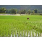 Thailand Phu Ang Rung Hiking tours(PKG1077)