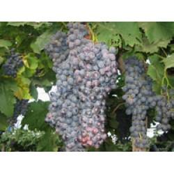 Wine Tasting Tour(PKG1081)