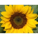 Growing Flowers and Plants(PKG1086)