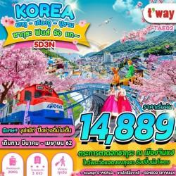 ทัวร์เกาหลี แทกู เคียงจู ปูซาน ชมดอกซากุระ สวนสนุก E-WORLD ช้อปปิ้ง (ซากุระฟินส์จังแก) [MAR] 5วัน 3คืน บิน T'WAY