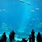 ข้อมูลเที่ยวออสเตรเลีย :  พิพิธภัณฑ์สัตว์น้ำเวสเทิร์นออสเตรเลีย (AQWA)