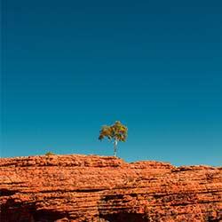 ข้อมูลเที่ยวประเทศออสเตรีย : อุทยานแห่งชาติวาตาก้า watarrka