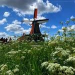 ข้อมูลเที่ยวเนเธอร์แลนด์ : หมู่บ้านกังหันลม