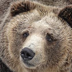 ข้อมูลเที่ยวญี่ปุ่น : สวนหมีโชวะชินซัง
