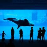 ข้อมูลเที่ยวญี่ปุ่น : พิพิธภัณฑ์สัตว์น้ำไคยูคัง (Aquarium Kaiyukan)