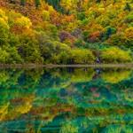 ข้อมูลเที่ยวจีน : เที่ยวทะเลสาบ 5 สี จิ่วไจ้โกว (Jiuzhaigou)