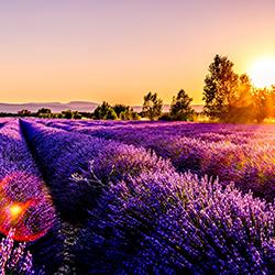 ข้อมูลเที่ยวฝรั่งเศส : โพรวองซ์ (Provence)
