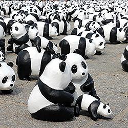 ไปดูแพนด้า 1,600 ตัว บุก ฮ่องกง และเมืองดังทั่วโลก