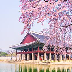 รีวิวเที่ยว กับทัวร์ Thaifly (Review Trip) : ซัมเมอร์นี้ไปดูซากุระเกาหลีกันเถอะ!!