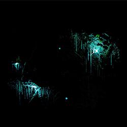 ข้อมูลเที่ยวนิวซีแลนด์ : ถ้ำไวโตโมโกลว์วอร์ม (Waitomo Glowworm Caves)