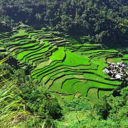 ข้อมูลเที่ยวฟิลิปปินส์ : นาขั้นบันไดบานาเว (Banaue Rice Terraces)