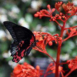 ข้อมูลเที่ยวสิงคโปร์ : สวนผีเสื้อและอาณาจักรแมลง (Butterfly Park and Insect Kingdom)