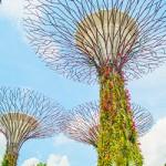 ข้อมูลเที่ยวสิงคโปร์ : Gardens by the Bay
