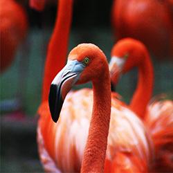 ข้อมูลเที่ยวสิงคโปร์ : สวนนกจูร่ง (Jurong Birdpark)