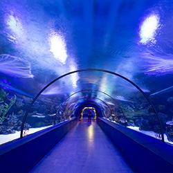 ข้อมูลเที่ยวสิงคโปร์ : อันเดอร์ วอเตอร์เวิล์ด (Underwater World)
