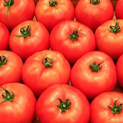 ข้อมูลเที่ยวสเปน : La Tomatina en Espana เทศกาลปามะเขือเทศของสเปน