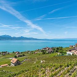ข้อมูลเที่ยวสวิตเซอร์แลนด์ : ไร่องุ่นเมืองลาโวซ์ (Lavaux)