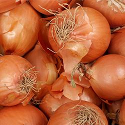 ข้อมูลเที่ยวสวิตเซอร์แลนด์ : เทศกาลหัวหอม