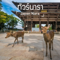 ทัวร์นารา (Nara Tour)