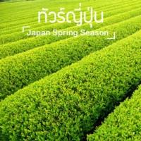 ทัวร์ญี่ปุ่น ฤดูใบไม้ผลิ