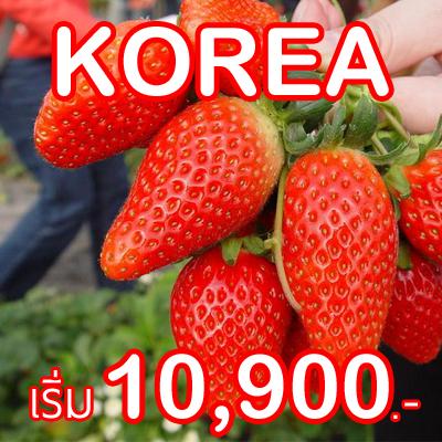 ทัวร์เกาหลี เกาะเชจู,เกาหลี,เกาะเชจู,เชจูโด,ทัวร์เกาะเชจู,ทัวร์เกาหลี,เที่ยวเกาหลี,เกาะเชจู,ไปเกาหลี ทัวร์,เกาหลี,ทัวร์เกาหลีราคาถูก,ทัวร์เกาหลี ตกปลาน้ำแข็ง,ทัวร์เกาหลี ชมซากุระ,ทัวร์เกาหลี สวนสนุก,ทัวร์เกาหลี ช้อปปิ้ง,ทัวร์เกาหลี เส้นทางใหม่,ทัวร์เกาหลีหรู,ทัวร์เกาหลี หิมะ,