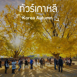 ทัวร์เกาหลี ใบไม้เปลี่ยนสี