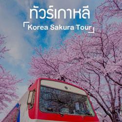 ทัวร์เกาหลี ซากุระ
