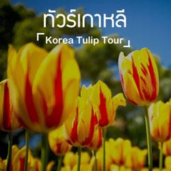 ทัวร์เกาหลี ชมทิวลิป