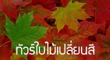ทัวร์ใบไม้เปลี่ยนสี,โปรโมชั่นทัวร์ฤดูใบไม้เปลี่ยนสี,Autumn Promotion