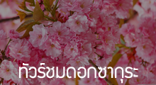 ทัวร์ชมดอกซากุระ,ทัวร์ซากุระ,ทัวร์ดูซากุระ,Sakura,Sakura Festival,Sakura Tour