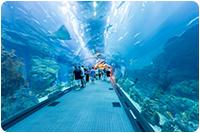 จัดกรุ๊ปทัวร์ดูไบ : ชมพิพิธภัณฑ์สัตว์น้ำที่ใหญ่ที่สุดในโลก