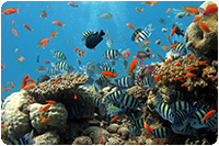 จัดทัวร์สิงคโปร์ : S.E.A. Aquarium
