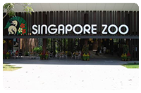 จัดกรุ๊ปทัวร์สิงคโปร์ : เที่ยวสวนสัตว์