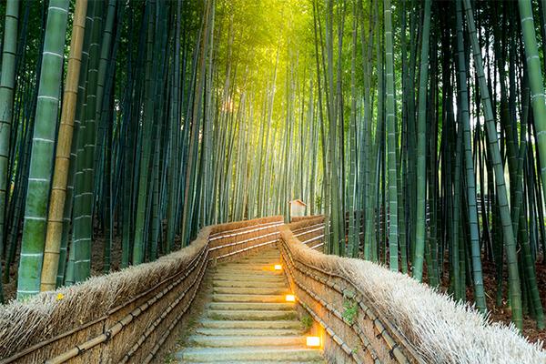 18 ภาพถ่ายจากประเทศญี่ปุ่นสวยๆ ที่คุณอาจไม่เคยเห็น,ป่าไผ่ในอาราชิยาม่า