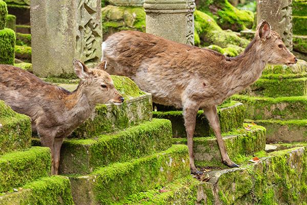 18 ภาพถ่ายจากประเทศญี่ปุ่นสวยๆ ที่คุณอาจไม่เคยเห็น,กวาง,นารา,ญี่ปุ่น