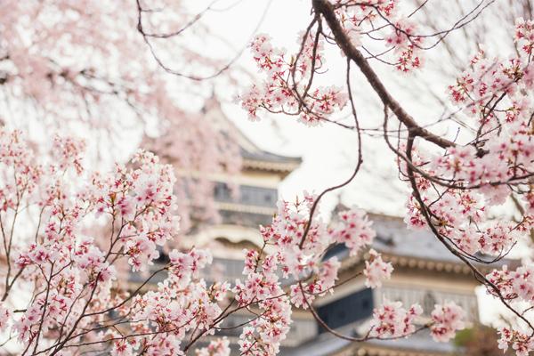18 ภาพถ่ายจากประเทศญี่ปุ่นสวยๆ ที่คุณอาจไม่เคยเห็น,ดอกซากุระ,เกียวโต