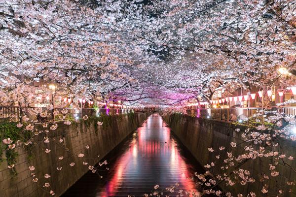 18 ภาพถ่ายจากประเทศญี่ปุ่นสวยๆ ที่คุณอาจไม่เคยเห็น,เผาเครื่องหอมในเทศกาลชมดอกซากุระประจำเกียวโต